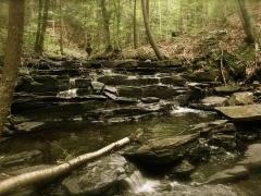 gnome steps, walker pond