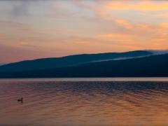 duck at dawn.JPG